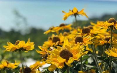 Kertek, virágok